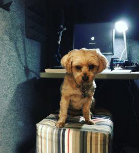 Reggie The Dog