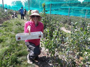 Caitlin Augusta blueberry picking