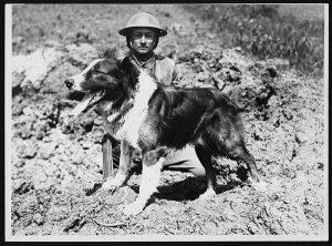 Messenger Dog