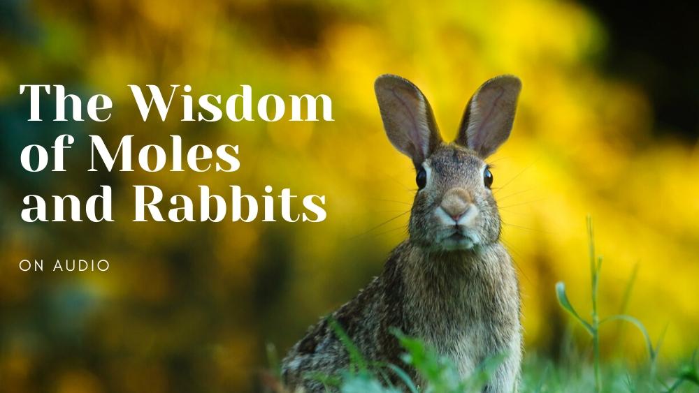 The Wisdom of Moles and Rabbits