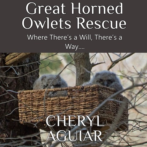 GREAT HORNED OWLETS RESCUE